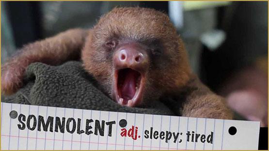 drowsiness, cannabidiol makes drowsy, cbd makes drowsy, cbd drowsy