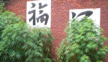 Trang trại bí mật Trung Quốc phát triển ở California