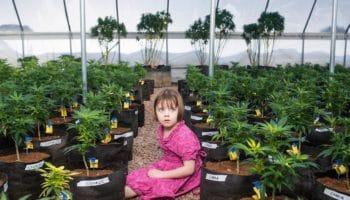 Le cannabis médical pour les enfants