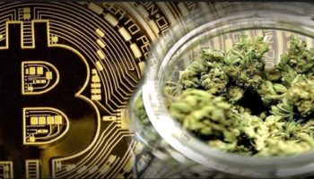 Stock Market Investment: Cannabis Safer Than Bitcoin