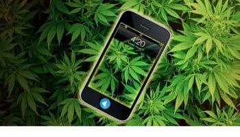 Telegrass, the cannabis supermarket