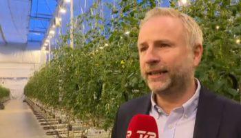 Un cultivateur de tomates danois veut devenir le plus grand producteur européen