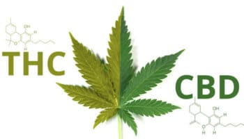 How the ratio between THC and CBD influences the effects