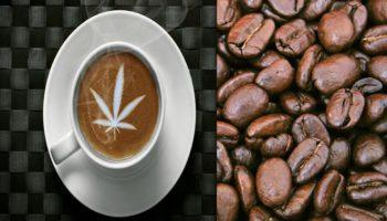 Hubungan aneh antara ganja dan kopi