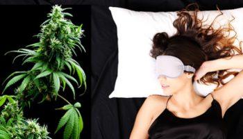 Le cannabis contre l'insomnie: les Australiens font l'expérience