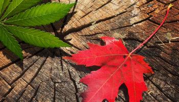 Canadá: la legalización no se pospondrá