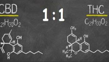 Existe-t-il des souches de cannabis au ratio 1:1?