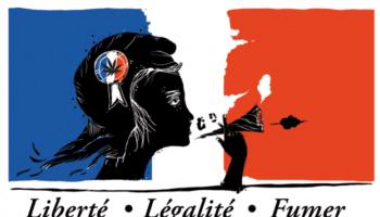 Frankrig kunne tillade medicinsk cannabis ifølge sundhedsministeren