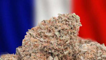 82% af franskmennene erklærer sig for en medicinsk cannabis