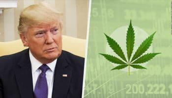 Menuju legalisasi ganja di seluruh AS