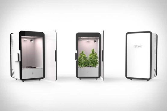 Grow Box, Home Grow, ระบบเพาะเลี้ยง, กล่องพริกในเมือง, วัฒนธรรมอัตโนมัติ