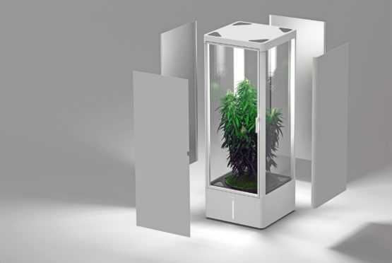 Grow Box, Home Grow, kulttuurijärjestelmä, urban chili box, automatisoitu kulttuuri