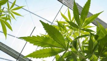 projet de loi,États-Unis,données sur le cannabis