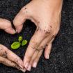 sols,fertilité,permaculture,biochar