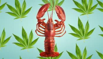 αστακός, το Legendary Lobster Pound του Charlotte, εστιατόριο