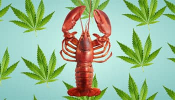 hummeri, Charlotte's Legendary Lobster Pound, ravintola