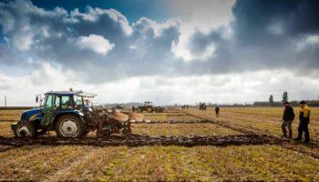 nông dân ireland