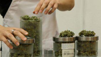 medicina herbal, dolor crónico