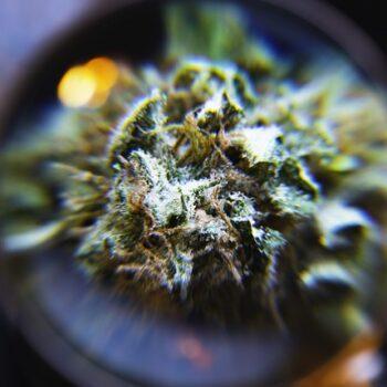 Nye cannabinoider