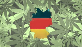 allemagne fleurs de cannabis