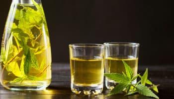 Farmako, bacterias, Zymomonas cannabinoidis, sal de lima THC, tequila