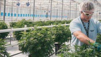 bachelorgrad i videnskabelige studier af medicinsk cannabis, University of Maryland, School of Pharmacy