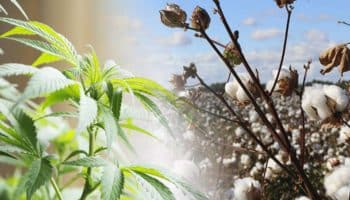 industrial hemp, Pesticide Action Network, pesticide