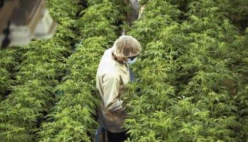 сельское хозяйство, устойчивая экономика