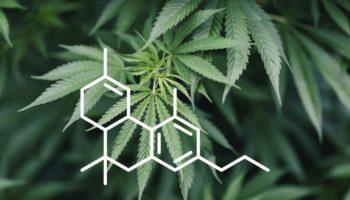 Tetrahydrocannabiphorol, THCP, thcp cannabinoid, thcv cannabinoid mới