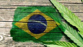 Anvisa, cannabis uit Brazilië