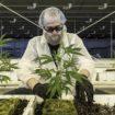 cannabis frankrijk proefproject voor werkgelegenheid, cannabis proefproject, frankrijk proefproject