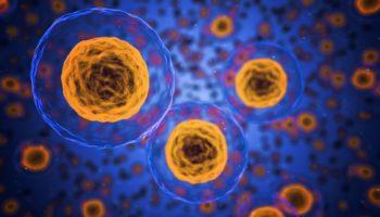 cellules cancéreuses,CBC ,propriétés anti-tumorales
