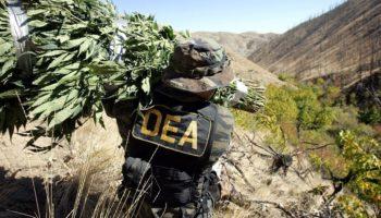 DEA, Διοίκηση Επιβολής Φαρμάκων