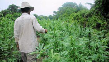 production ,Ouganda