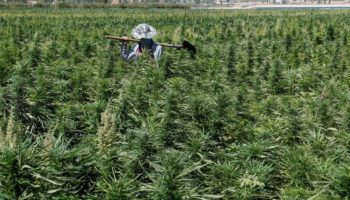 легализация, Ливан