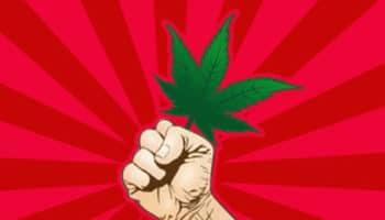 playboy,pro-cannabis