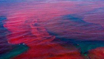 algues toxiques