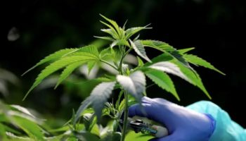 legalisering af Israel