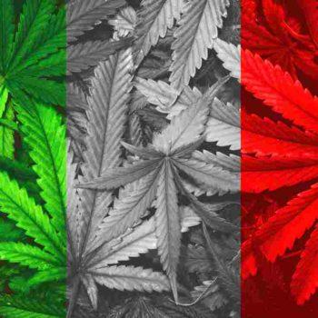cannabis en Italie,cannabis italien traduction,joint de cannabis en italien,legalisation en Italie,légaliser en italien,légalisation signature en italie,legalisation italie,légalisation italie 2020,legalisation en italien,legalisation Italienne,légalisation traduction italienne,legalisation italienne en france