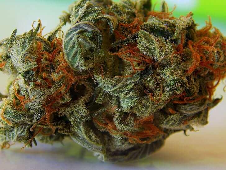 Orange Bud,orange bud cbd,orange bud effet,orange bud auto,orange bud sensi seed