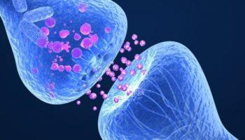 ендоканабіноїдна, незбалансована ендоканабіноїдна система