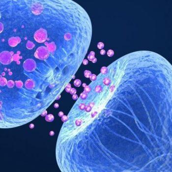 endocannabinoïde,système endocannabinoïde déséquilibré