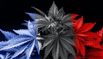 collectif ACT,France Cannabis thérapeutique