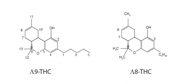 THH delta 8,effet Δ-9-tétrahydrocannabinol,Delta-8