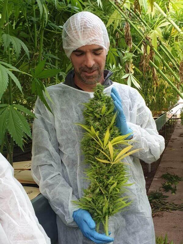brugerdefineret cannabis