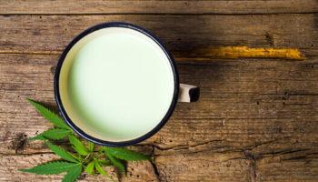 Recette au lait,lait de chanvre,Lait de cannabis