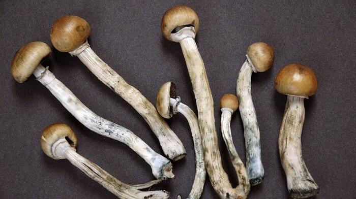 декриміналізація, психоделічні гриби