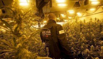 opération policière,La Mota,graines de cannabis en Espagne