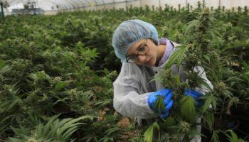 legalização total em Israel, não incriminação, legalização em Israel