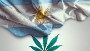dyrkning af cannabis til medicinsk brug, dyrkning derhjemme, dyrkning i Argentina